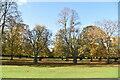 TQ1570 : Chestnut Trees by N Chadwick