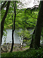 NJ9309 : Fallen trees in the river Don by Stephen Craven