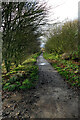 NZ4237 : Hart to Haswell Walkway towards Castle Eden by Andy Waddington