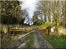 S4127 : Forest Entrance by kevin higgins