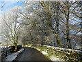 NY7005 : Wintry woodland by John H Darch