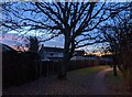 TF0820 : A naked oak at dawn by Bob Harvey