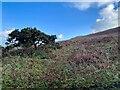 SS4392 : Llanmadoc hill by Alan Hughes