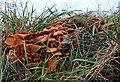 NJ1566 : Fungi by Anne Burgess