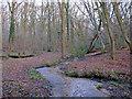 TL7907 : Stream between Birch Wood and Woodham Walter Common by Roger Jones