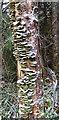 NJ3557 : Green Fungi by Anne Burgess