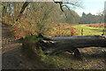 SX8078 : Fallen tree, Parke by Derek Harper