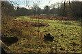 SX8078 : Meadow by the Bovey by Derek Harper