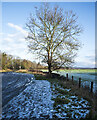 NY9563 : Lone tree beside icy car park by Trevor Littlewood