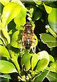 SX9065 : Bee on box, Torre by Derek Harper
