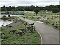 SJ8848 : Canada Geese in Central Forest Park, Hanley by Jonathan Hutchins