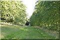 TQ5345 : Avenue of Chestnut trees by N Chadwick