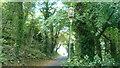 SO7742 : Gas lamp on Holywell Road (Malvern Wells) by Fabian Musto