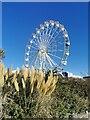 TV6198 : Ferris Wheel on Western Lawns, Eastbourne by PAUL FARMER