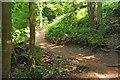 SX8863 : Scadson Freeride Park by Derek Harper
