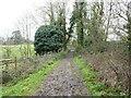 TG2529 : West on muddy path by David Pashley