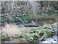 NZ2386 : Heron Fishing on the River Wansbeck by Les Hull