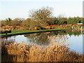 TQ0658 : Wisley - Grass Garden by Colin Smith