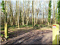 TG2529 : Scrub Woodland from no entry open gate by David Pashley