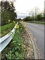 SJ7952 : Stray oilseed rape plant beside A500 slip road by Jonathan Hutchins
