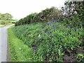 SJ8051 : Bluebells on verge of Cross Lane by Jonathan Hutchins