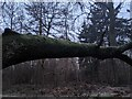 TF0820 : Branch with moss by Bob Harvey