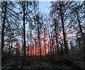 TF0820 : Trees with dawn sky by Bob Harvey