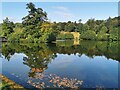 TQ4551 : Lake at Chartwell by PAUL FARMER