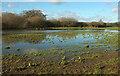 SX8574 : Flooded field, Teign flood plain by Derek Harper