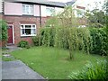 SJ9593 : Willow tree on Werneth Avenue by Gerald England
