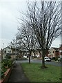 SE3018 : Trees along Lennox Drive by Christine Johnstone