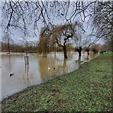 TL0649 : The Great Ouse in Flood - Boxing Day 2020 by Duncan Richardson