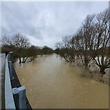 TL0649 : The Great Ouse in Flood - Boxing Day 2020 by DuncanRichardson