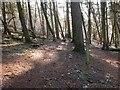 NT2541 : Woodland path, Ven Law by Jim Barton
