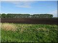 TL5268 : Poplar windbreak near the Cam by Hugh Venables