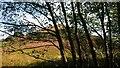 SD8313 : Valley Hillside near Birtle Dene Mill by John Westhead