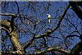 TQ3870 : Beckenham Place Park by Peter Trimming