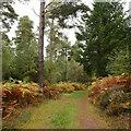 NH7850 : Track, Lochandinty Wood by Craig Wallace