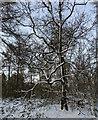 TF0820 : Winter clothing by Bob Harvey