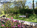ST1334 : Spring colours at Crowcombe Heathfield station by Marika Reinholds