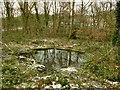 SE2437 : Small pond in Hawksworth Wood by Stephen Craven