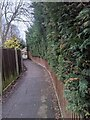 TF0820 : Fence and hedge by Bob Harvey