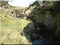NS7526 : Tributary of Douglas Water by Chris Wimbush