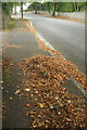 SX8962 : Fallen leaves, Livermead by Derek Harper