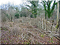 SU0019 : RSPB Garston Wood by Clive Perrin
