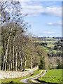 NZ1134 : Farm road descending to Monkfield and Bracken Hill by Trevor Littlewood