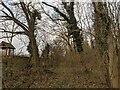TF0820 : The edge of the wood by Bob Harvey