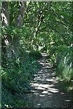 TQ3935 : Sussex Border Path by N Chadwick