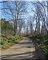 TL4346 : Thriplow: daffodils on Farm Lane by John Sutton