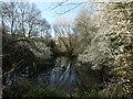 TQ4577 : The Slade Ponds by Marathon